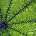 Green Leaf by Urban Shooters