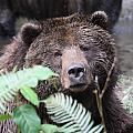 Grizzley - 0011 by S and S Photo