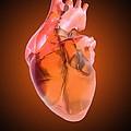 Heart Of Glass by Mehau Kulyk