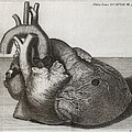 Heart Of King George II, 18th Century by Middle Temple Library
