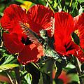 Hibiscus Heaven by Lynn Bauer