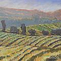 Hillside Vineyard by Kip Decker