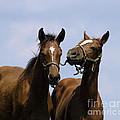 Horse Foul Play Iv by Terri Winkler