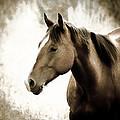 Horse by Steve McKinzie