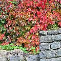 Hot Autumn Leaves 02 by Arik Baltinester
