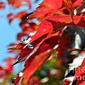 Hot Autumn Leaves by Arik Baltinester