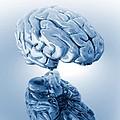 Human Brain, Artwork by Victor Habbick Visions