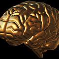 Human Brain by Roger Harris
