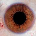 Human Eye by Raul Gonzalez Perez