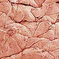 Human Skin, Sem by Susumu Nishinaga