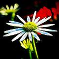 In Bloom  by Steve McKinzie