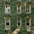 Ivy League by John Greim