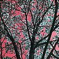 Kimono Pink by Carolyn Stagger Cokley