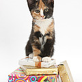 Kitten On Packages by Mark Taylor