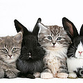 Kittens And Rabbits by Mark Taylor