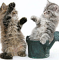 Kittens And Watering Can by Mark Taylor