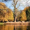 Lazienki Park Autumn Scenery by Artur Bogacki