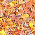 Leaf by Autumn Wade