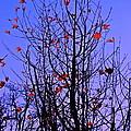Leaves 3 by Pamela Cooper