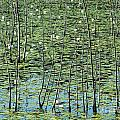 Lilly Pond by John Greim