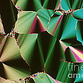 Liquid Crystalline Dna by Michael W. Davidson
