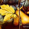Lone Leaf by Darren Fisher