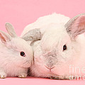 Lop Rabbits by Mark Taylor