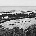 Love On The Beach by Brandon Radford