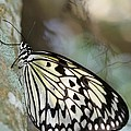 Magical Butterfly by Sabrina L Ryan