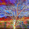 Magical Tree 3 by Sheila Kay McIntyre