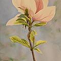 Magnolia Blossom by Betty-Anne McDonald