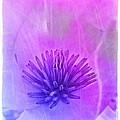 Magnolia by Judi Bagwell