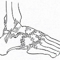 Major Ligaments Of The Foot by Science Source