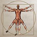 Male Musculature, Artwork by Friedrich Saurer