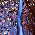 Maple Leaves by Susan Rovira