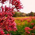 Meadow by Jeff Heimlich