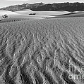 Mesquite Dunes 15 by Bob Christopher