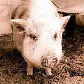 Miss Piggie
