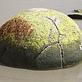Moeraki Boulder, Koekohe Beach, New by Richard Roscoe
