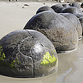 Moeraki Boulders, Koekohe Beach, New by Richard Roscoe