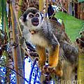 Monkeyshines by Elinor Mavor
