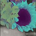 Moonflower by Linda Dunn