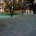 Morning Sun by Susan Herber