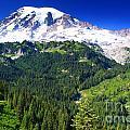 Mount Rainier by Angela Q