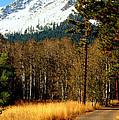Mountain Road by Lynn Bawden