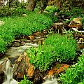 Mountain Stream by N D Finer