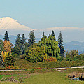 Mt. Adams In The Country by Athena Mckinzie
