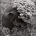 My Garden by Eena Bo