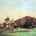 Native American Indian Buffalo Hunting by Photo Researchers