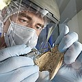 Neanderthal Dna Extraction by Volker Steger